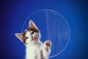 Nomes para Gatos – Ideias Incríveis
